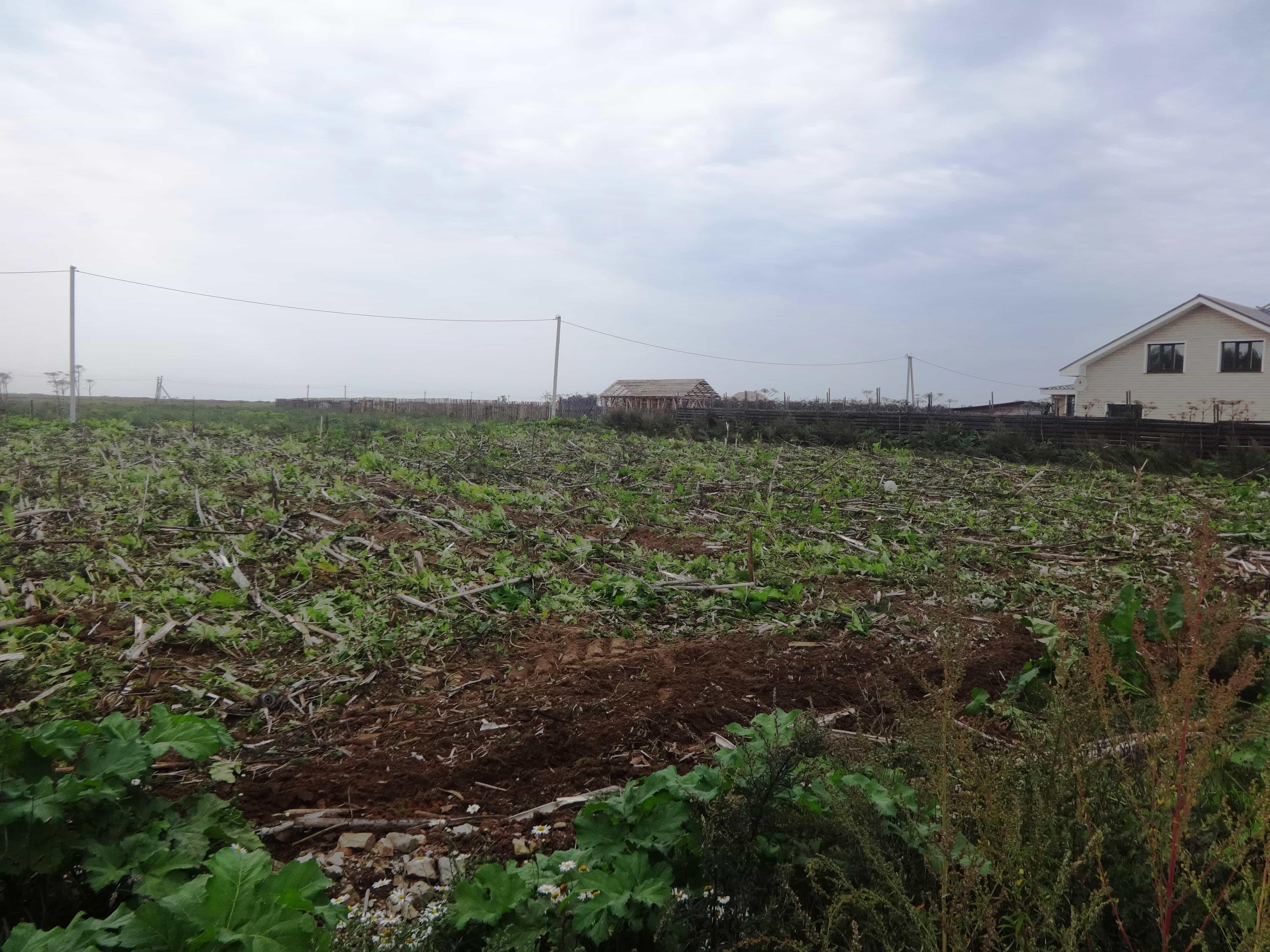 Земельный участок 15 соток в д. Родина