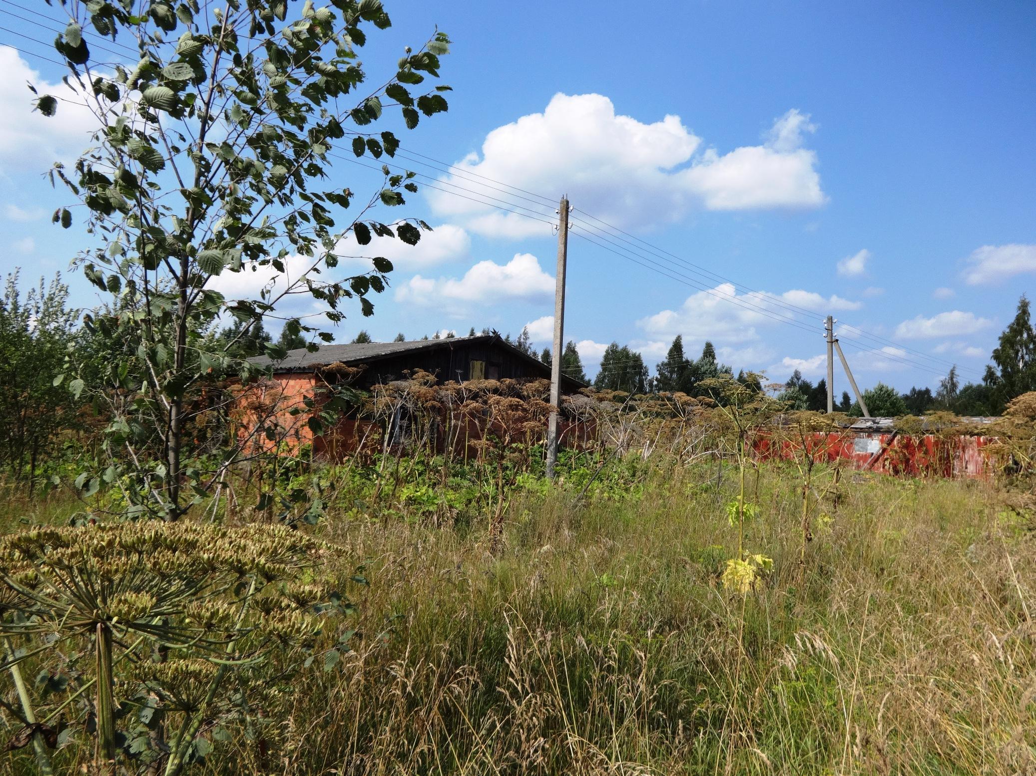 Земельный участок 50 соток  в д. Вашина Гора Печорского района