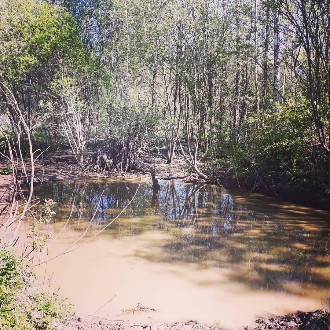 Земельный участок 12 соток в д. Барановка (15 км от г. Пскова)