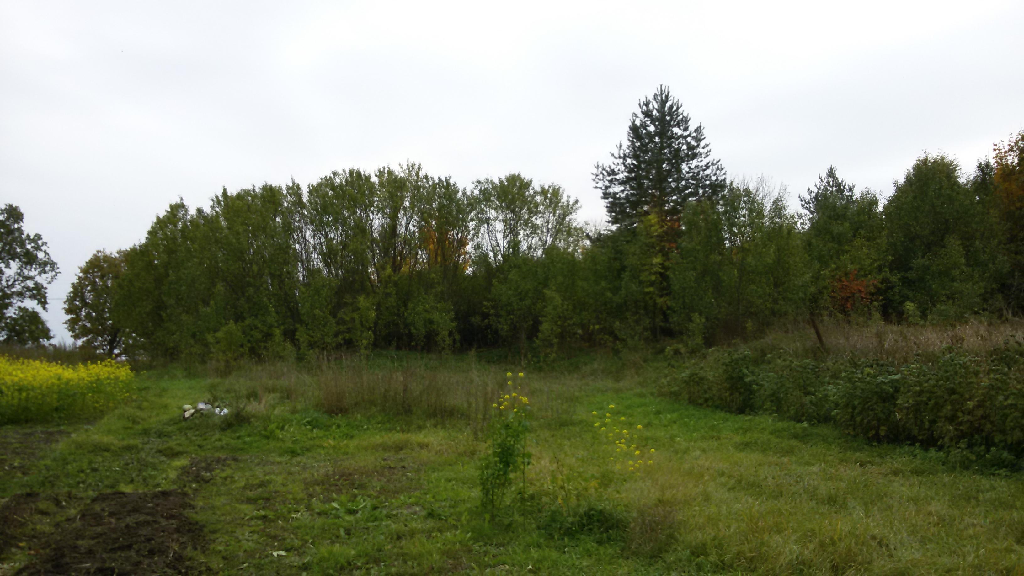 Земельный участок д. Жилино (Палкинский район)